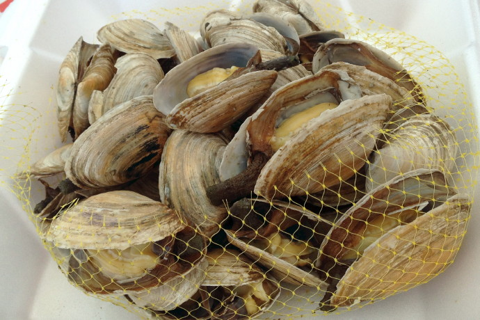 photo of steamers from Eastwind Lobster, Buzzards Bay, MA